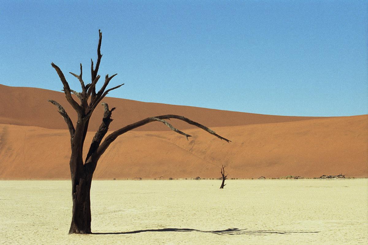 Dode bomen in Deadvlei in Namibie